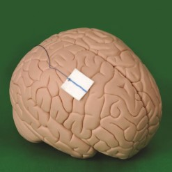 neurosurgical-pads
